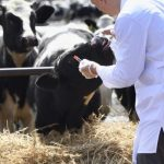 Looking After the Health of a Dairy Herd